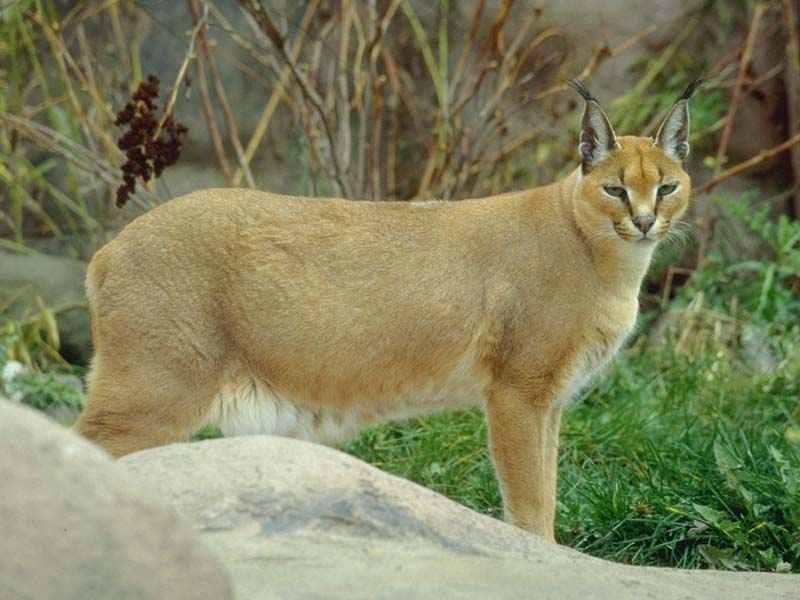Животные и птицы обитающие в республике башкортостан
