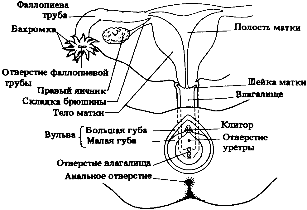 na-kakom-rasstoyanii-nahoditsya-vlagalishe