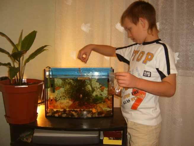 Уход за аквариумом в домашних условиях золотые рыбки