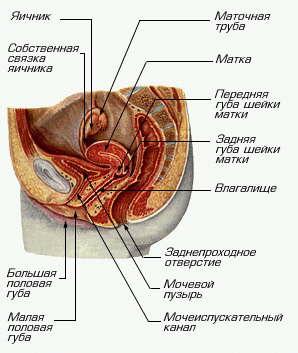 povishenie-sekretsii-vo-vlagalishe