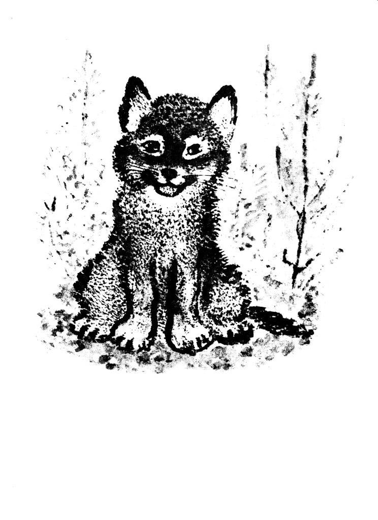 Рисунки из рассказа волчишко чарушина 59