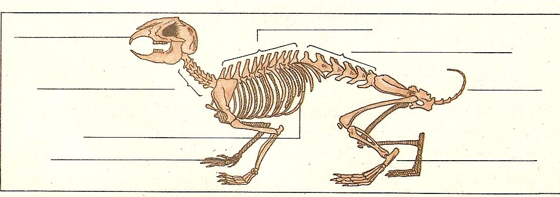 социальных рассмотрите рисунок напишите названия костей скелета млекопитающих полиэстера будет служить