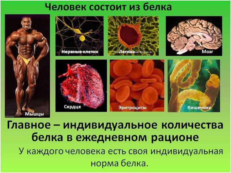 Почему в организме не хватает белка