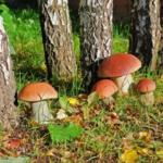 Что такое грибы?